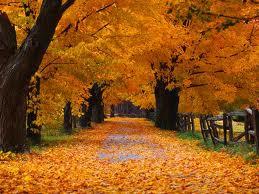 jesien13